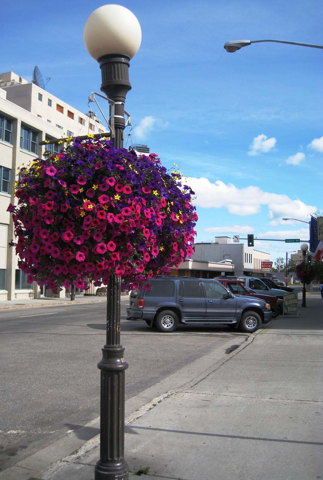 Vibrant Hanging Baskets A Recipe For Success Gardening