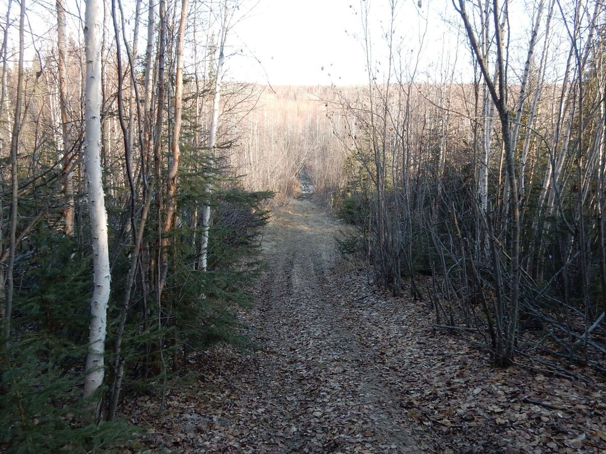 Rosie Creek trail