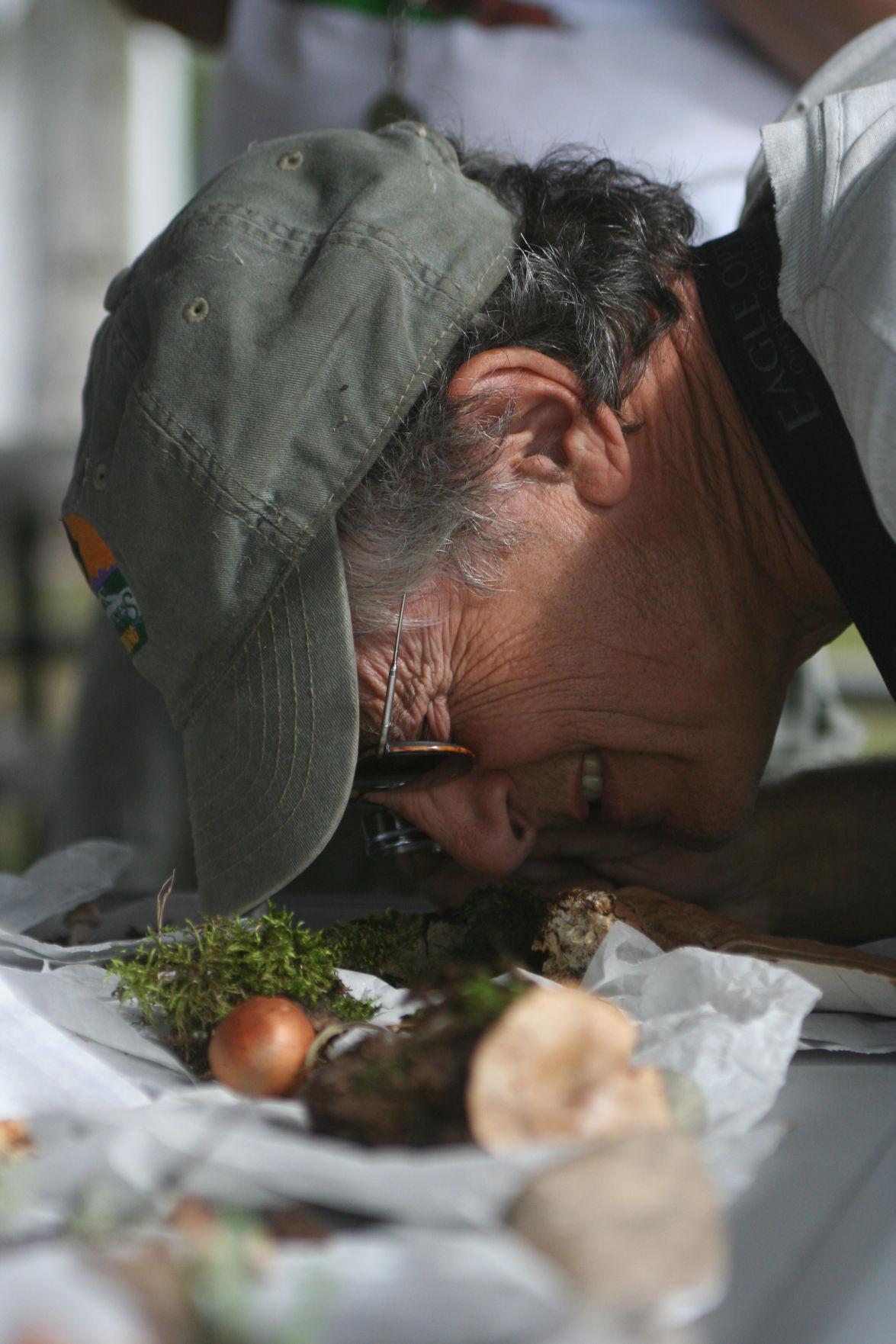 Mushrooms of Tanana Region