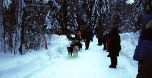 Yukon Quest musher Sass first out of Dawson City; Shank-Neff makes it in to halfway point
