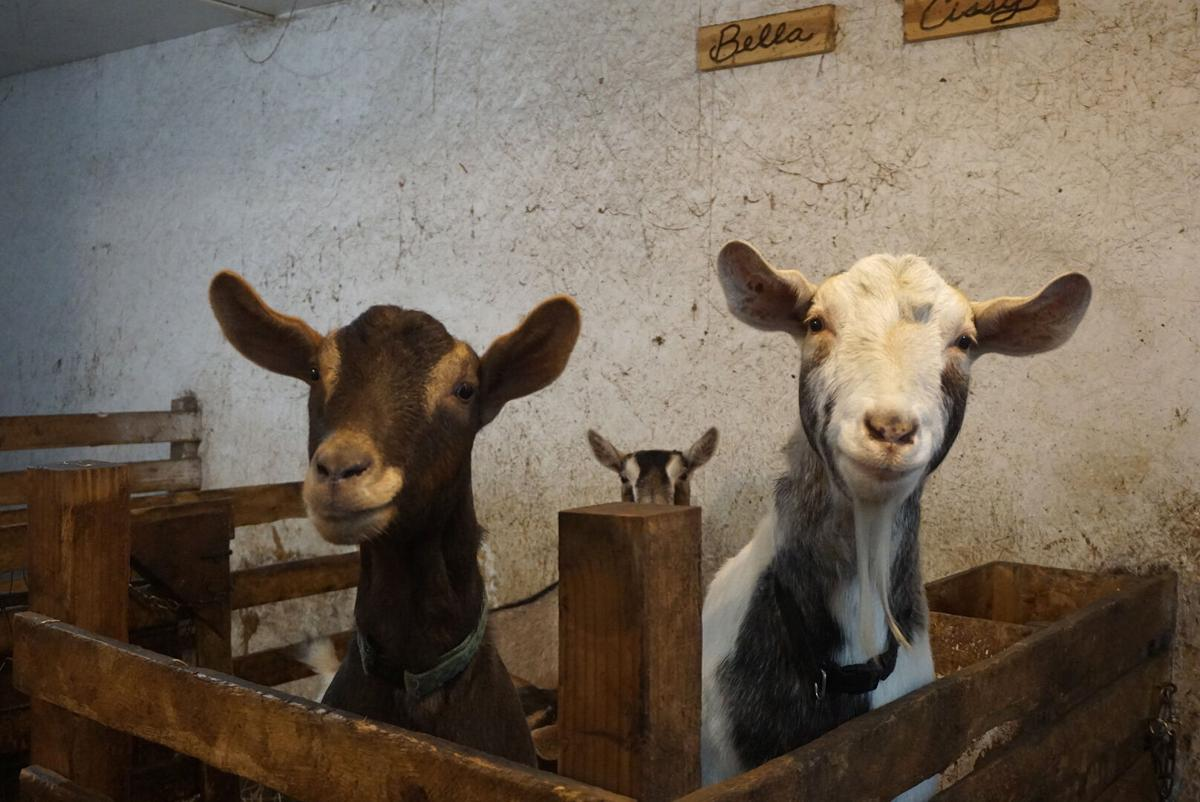 Goats and Soap