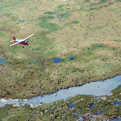 ANWR on track for oil lease sale