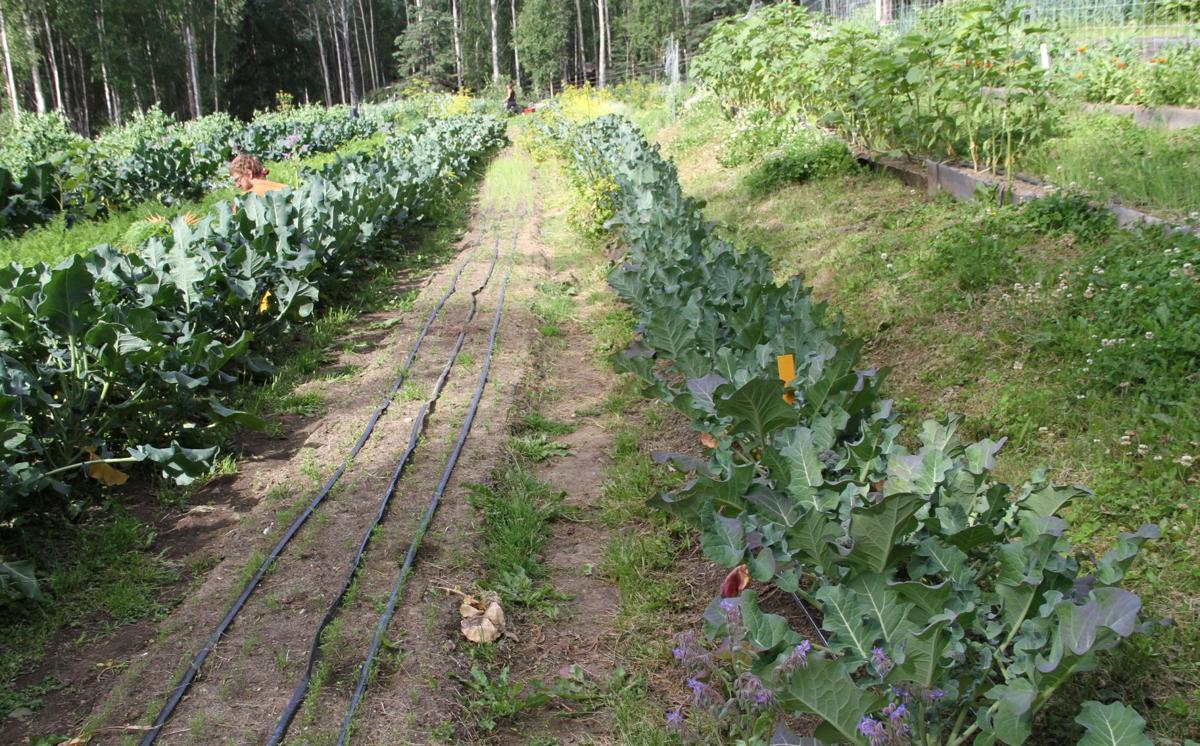 a watering water efficient an in save way is plants system to drip irrigation garden