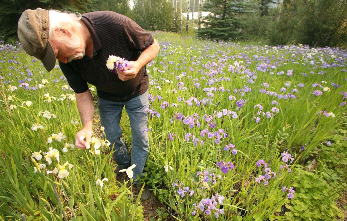 An eye for irises grower pulls a rainbow of varieties from his jack finch iris grower izmirmasajfo