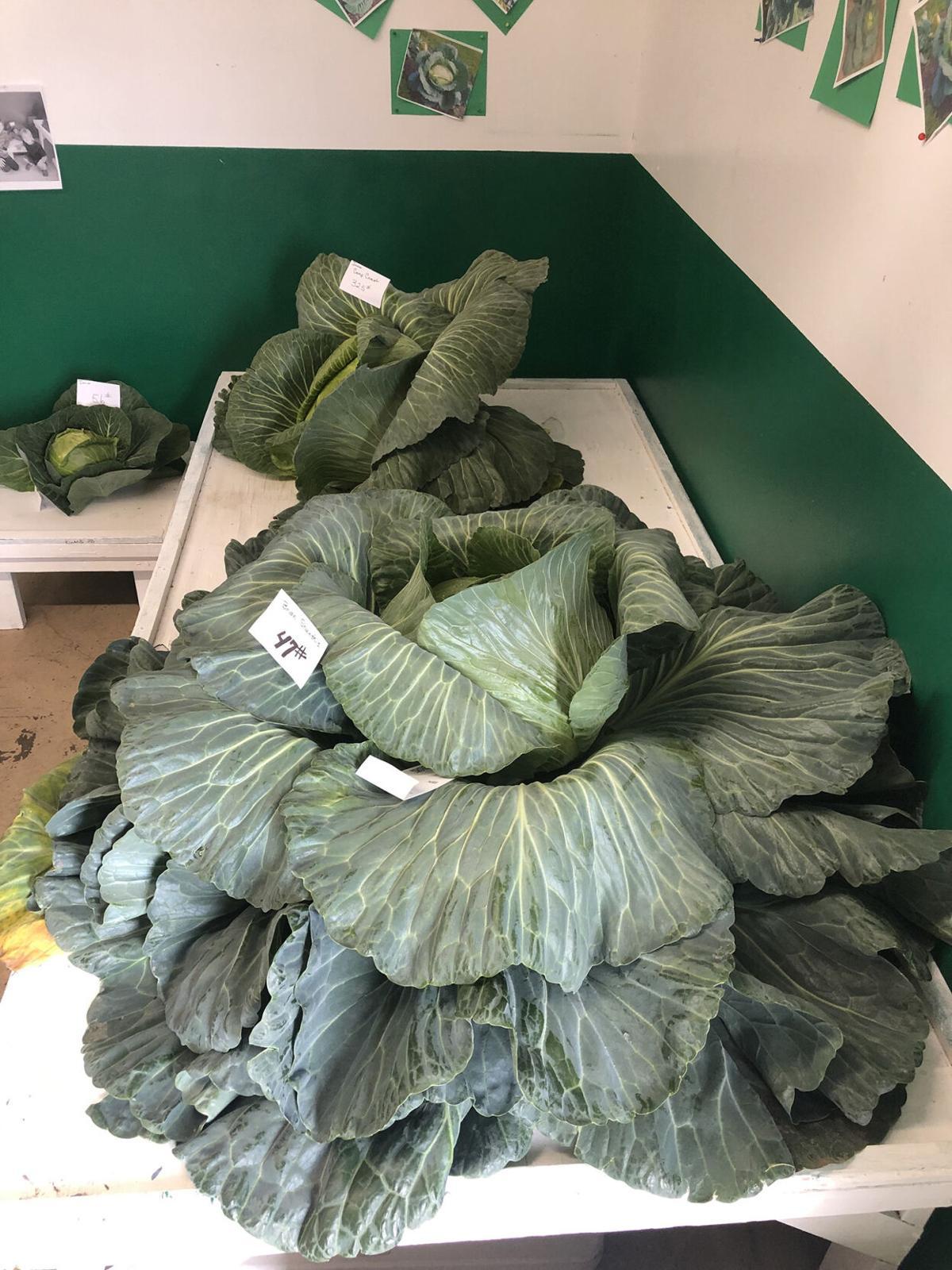 L01- Cabbage Pic 2.jpg