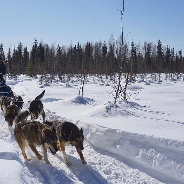 Noble Paws Kennel teaches leadership to kids with mushing
