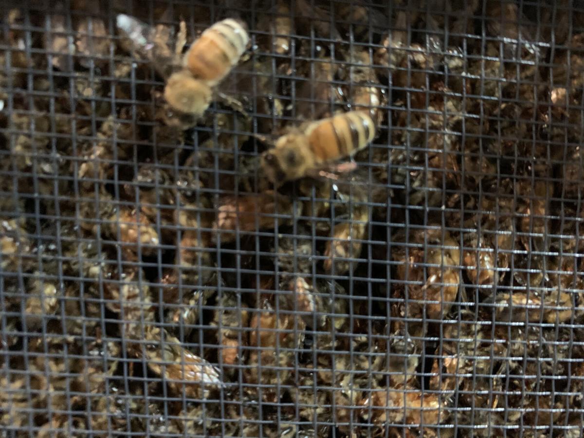 L03- Bee Pic 2.jpg