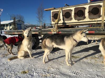 Yukon Quest 300 start