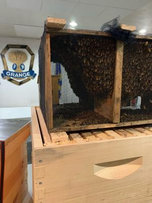 Something's abuzz in North Pole; First it was bee removal at North Pole Grange, now it's bee education