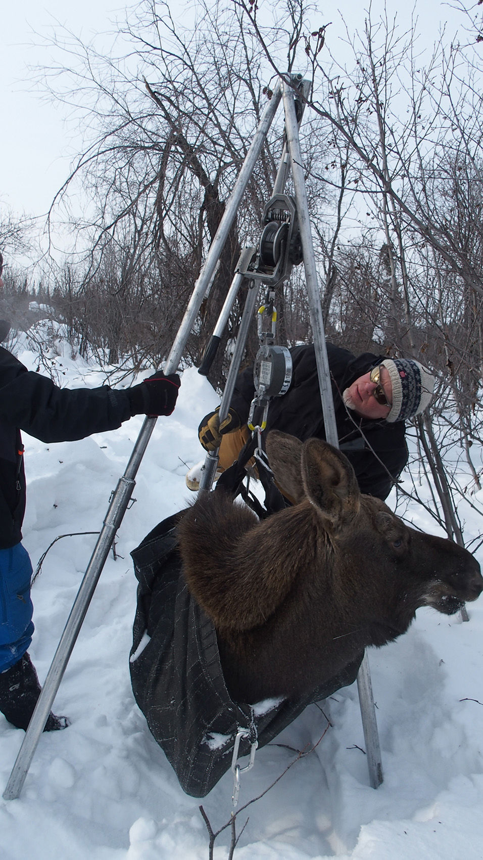 Unit 20A moose