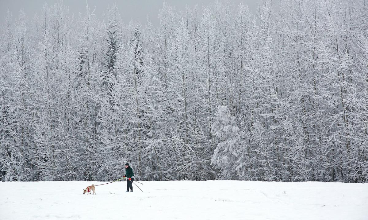 Winter Landscape Skijor