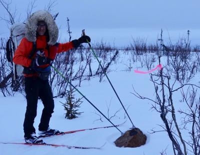 Oldest rocks in Alaska found near Iditarod