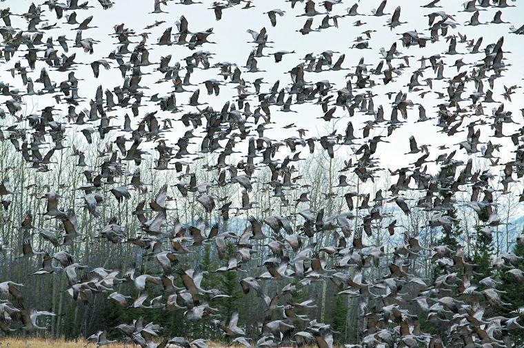 Crazy migration