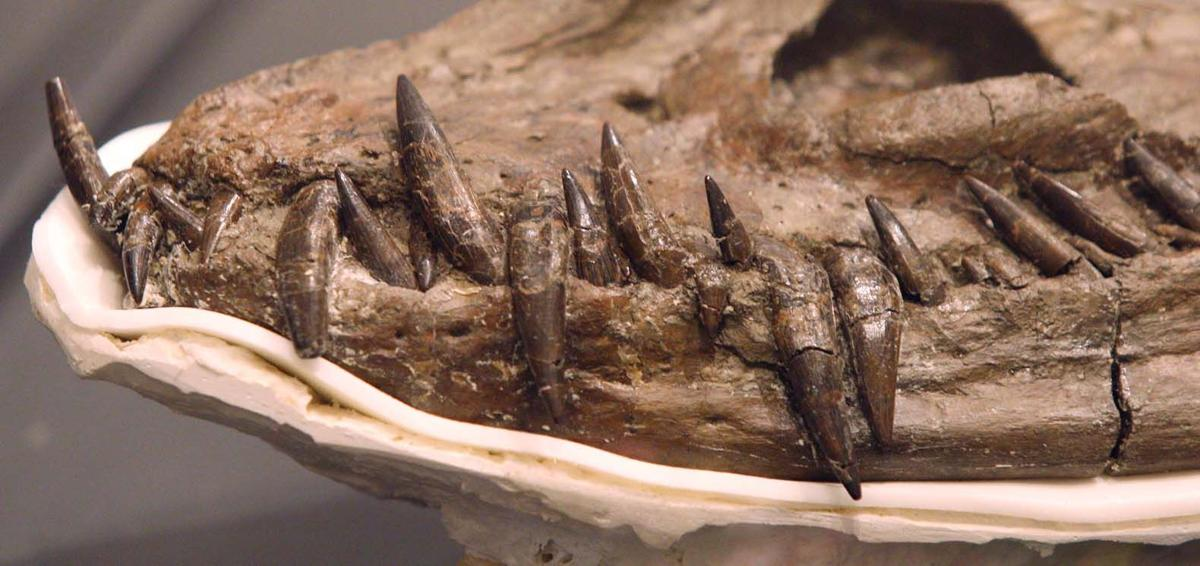 Elasmosaur Fossils Discovered In Talkeetna Mountains