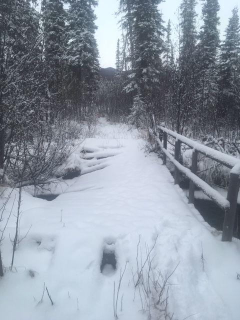 Colorado Creek Trail Bridge