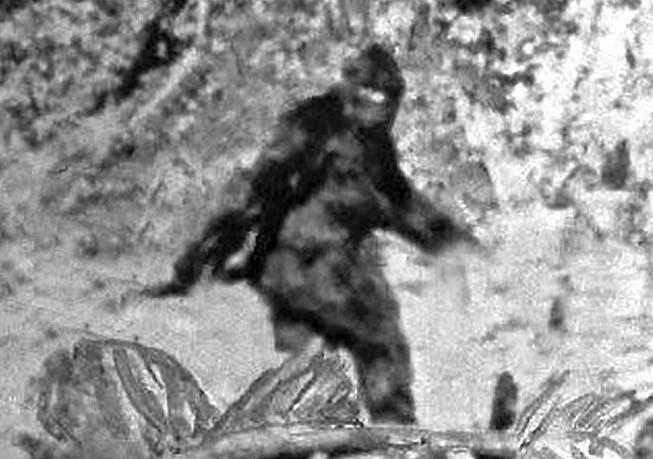 The real bigfoot?