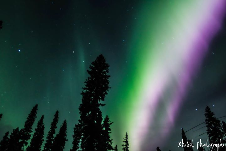 Salcha aurora