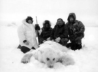 Polar bear-grizzly hybrid