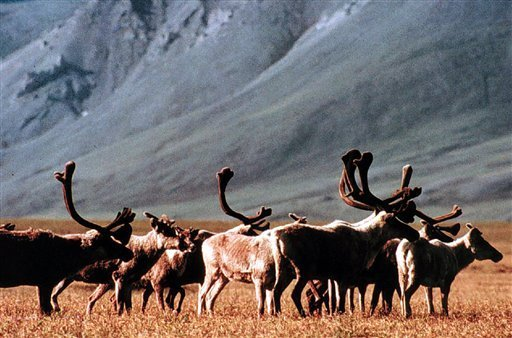 As ANWR turns 50, the refuge reaches a critical juncture