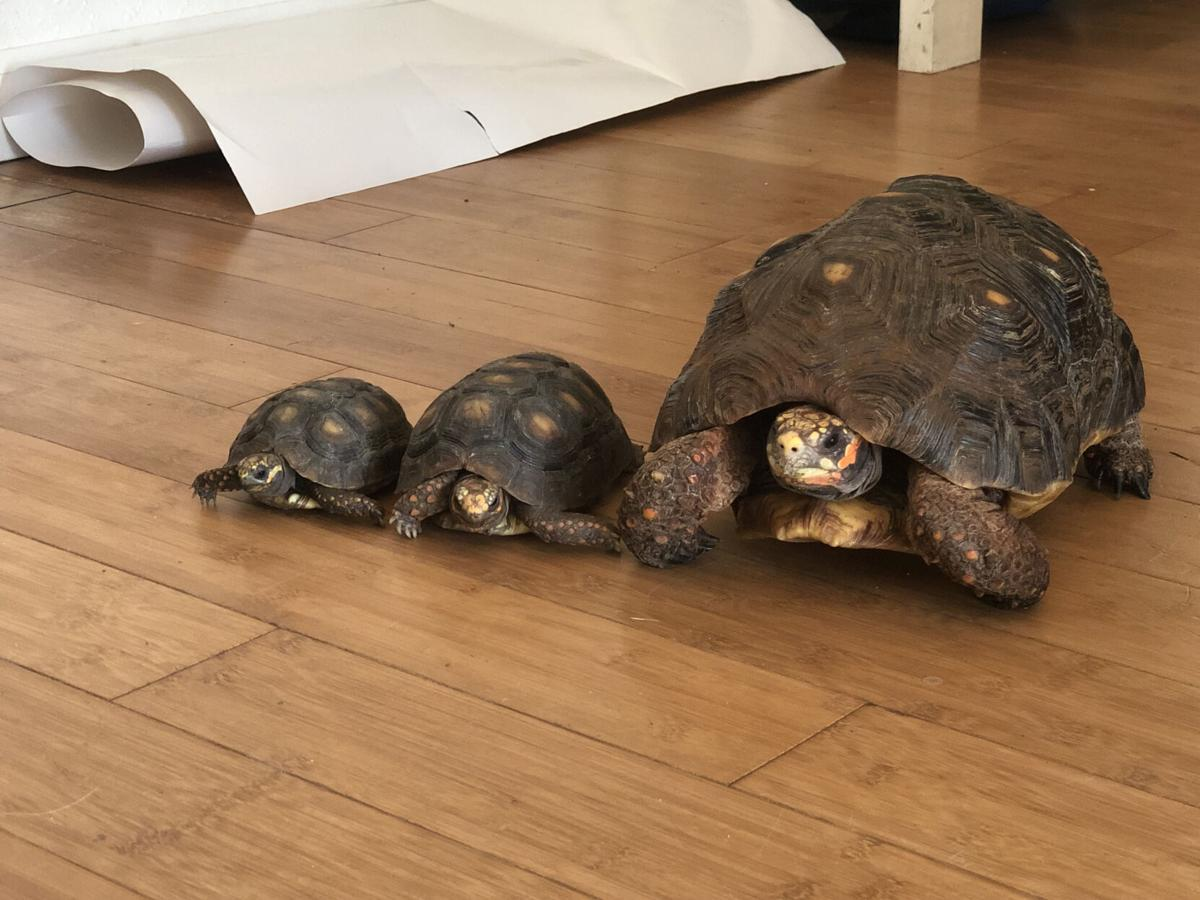 Our Town: Turtles