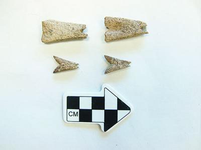 Prehistoric earring