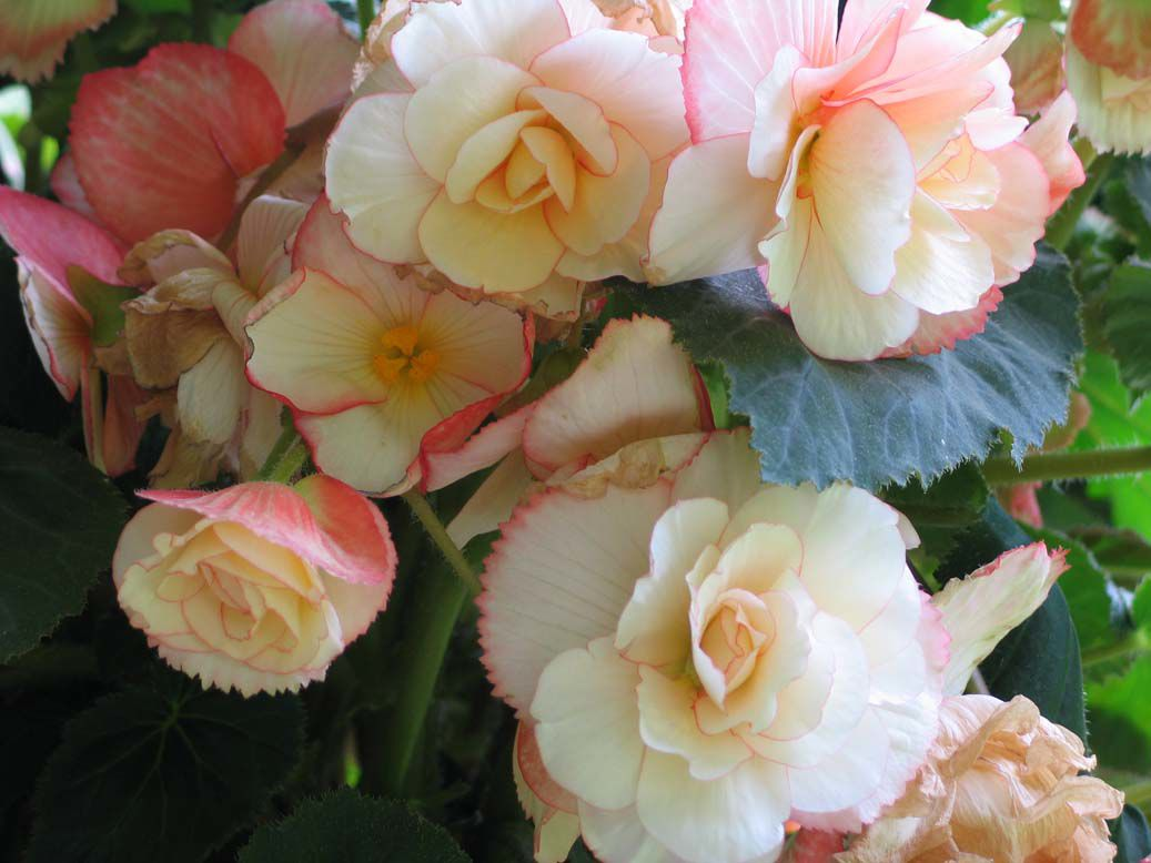 More end-of-summer garden reminders | Gardening | newsminer.com