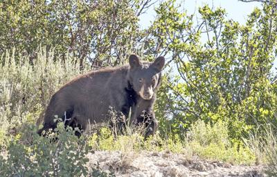 Bear Encounters On The Rise
