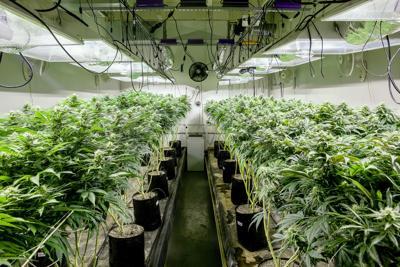 Missouri marijuana cultivation licenses (copy)