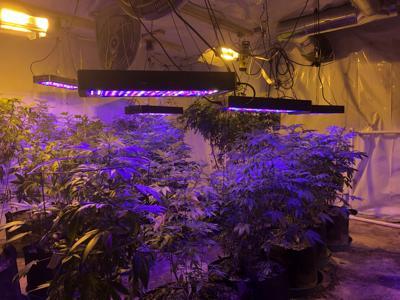 Medical Marijuana picture