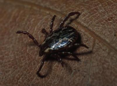 Preventing tick bites this upcoming summer