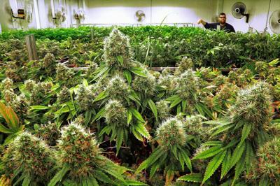 Placeholder on medical marijuana