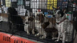 Against All Odds ResQ Shelter brings furry friends to St. Joseph