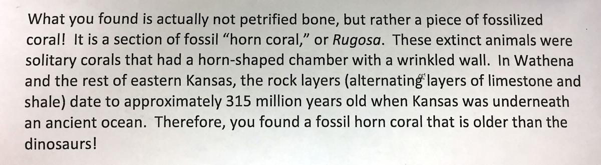 Letter explaining the fossil