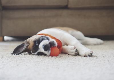 Dog editorial image