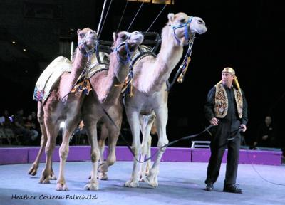 Moila Shrine Circus