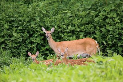 180318_deer