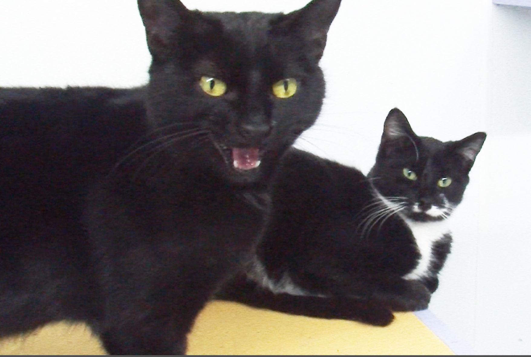 Image of: Black Kitten Korner Comes To Local Shelter Purr Partners Kitten Korner Set For Animal Shelter Life Newspressnowcom