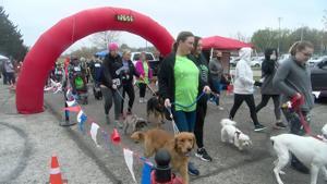 Friends of the Animal Shelter Annual 5K Run/Walk a success