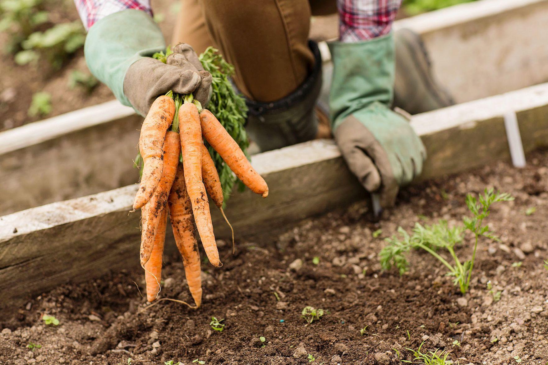 Community gardens benefit from grants Local News newspressnowcom