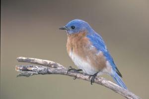 National Bird Feeding Month In Missouri