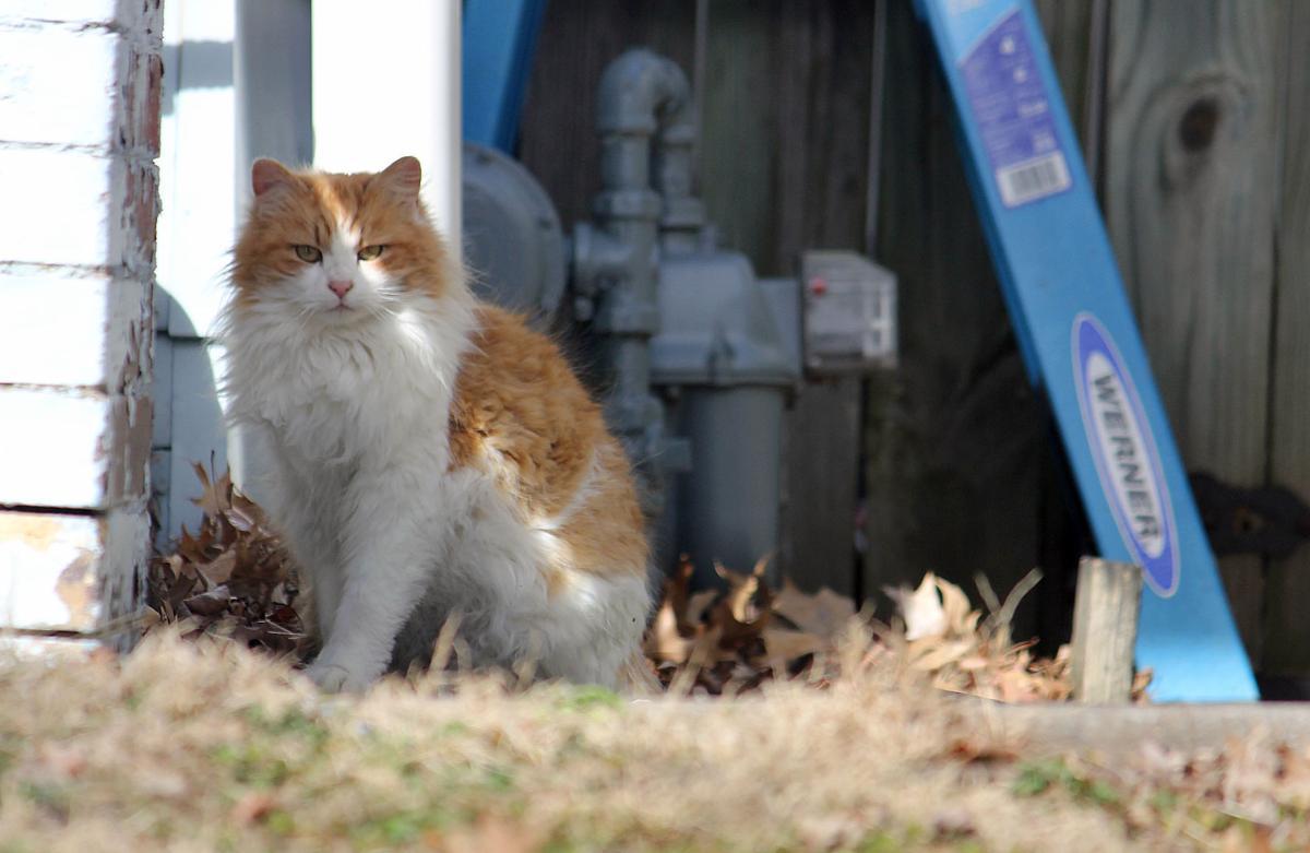 feral felines stray cats roam st joseph u0027s streets local news