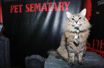 """Pet Sematary"""