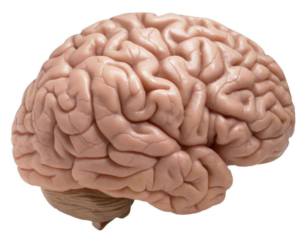 Uc researches diet depression news newsrecord human brain ccuart Image collections