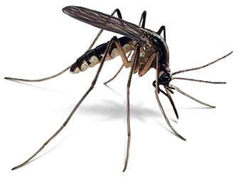 Public Health Department reduces mosquito breeding areas, asks residents to block the bite