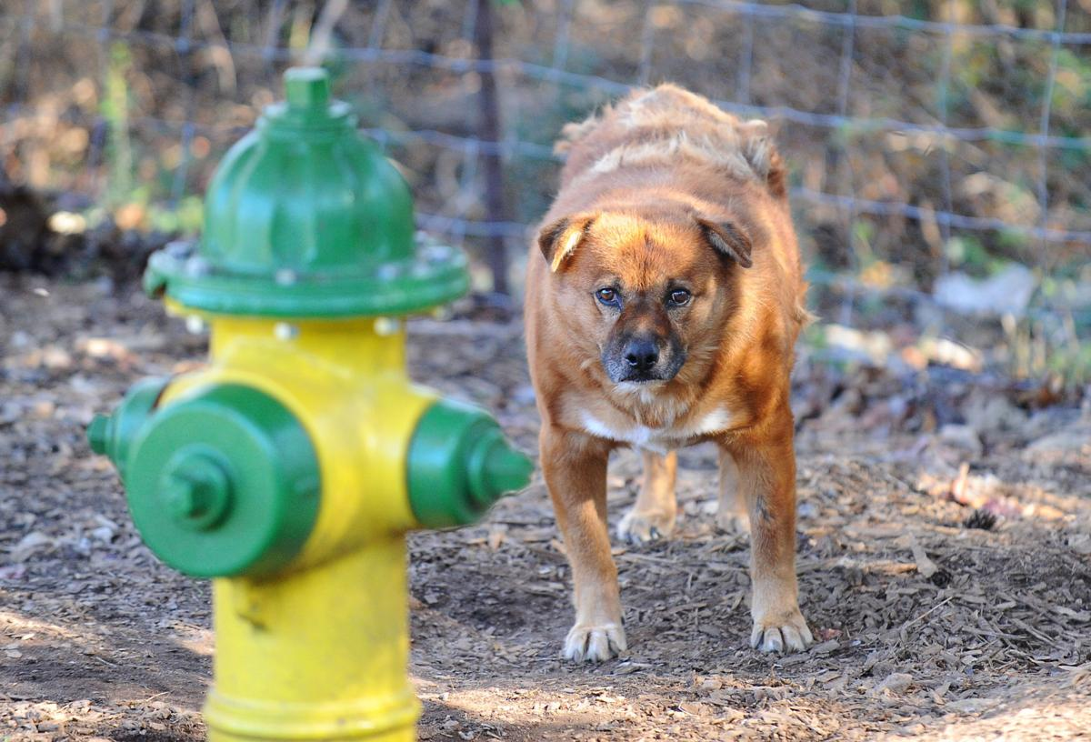 FIRE HYDRANT AND DOG