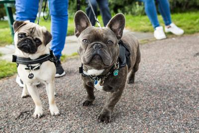 Spooky Ghost Tours That Welcome You and Your Pooch (image)