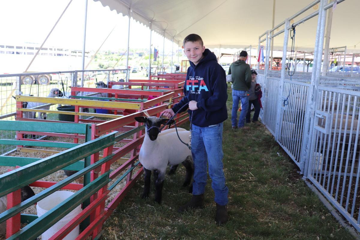 4-H and FFA Market Animal Show 2021