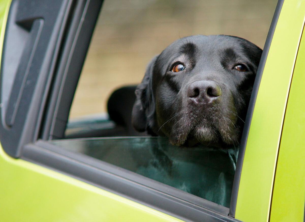 Heads up! To avoid danger, keep your dog's head inside the car  - Image