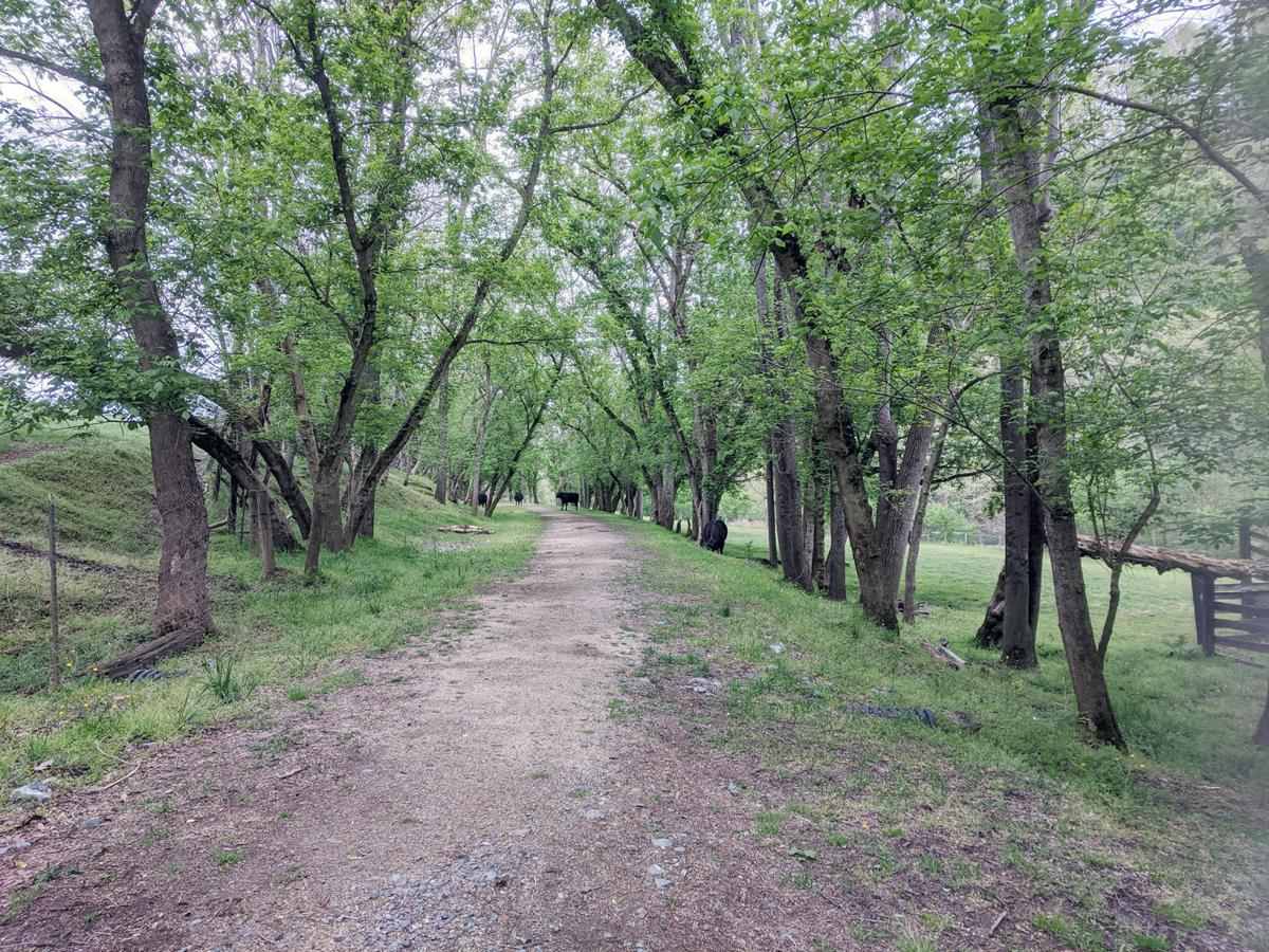 Chessie Nature Trail