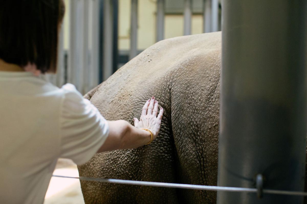 Zoo-Rhino_0003.jpg